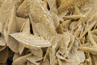 close-up view of a specimen