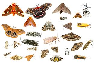 assorted moths
