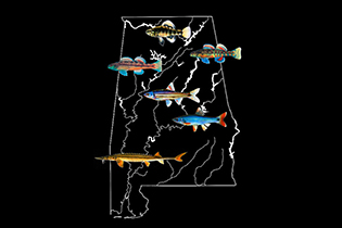 outline of Alabama with drawings of fishes superimposed on it