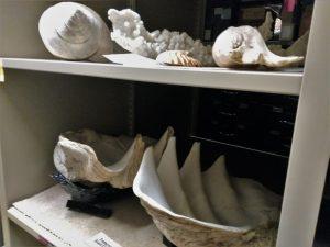 Exhibit Shells